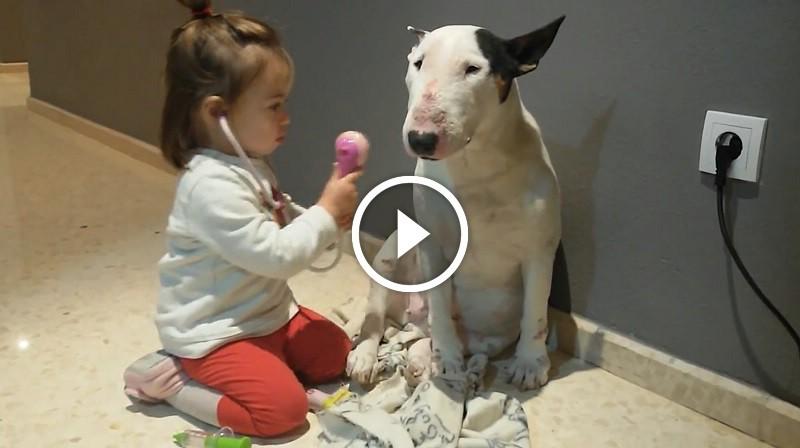 Édes kislány játszik doktornéniset bullterrierjével! A nap videója!