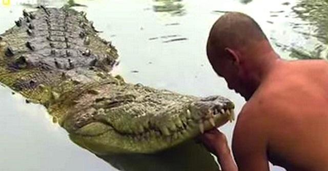 krokodil-ember