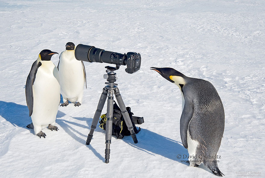 animals-with-camera-helping-photographers-10