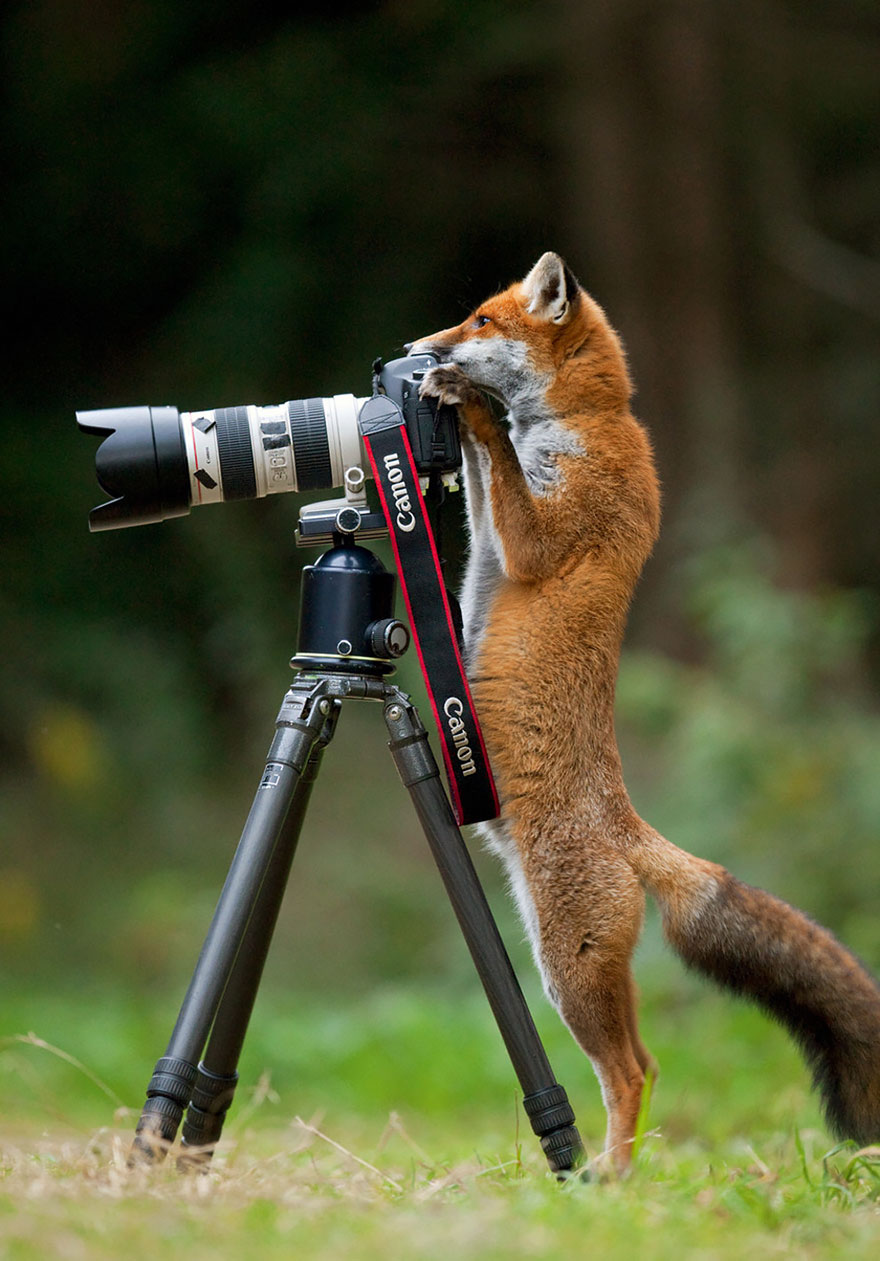 animals-with-camera-helping-photographers-11