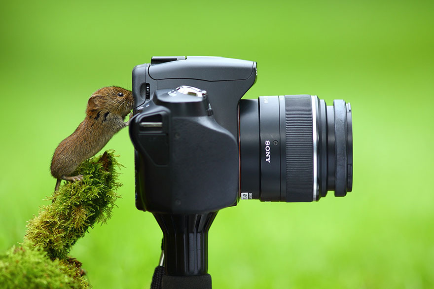 animals-with-camera-helping-photographers-12