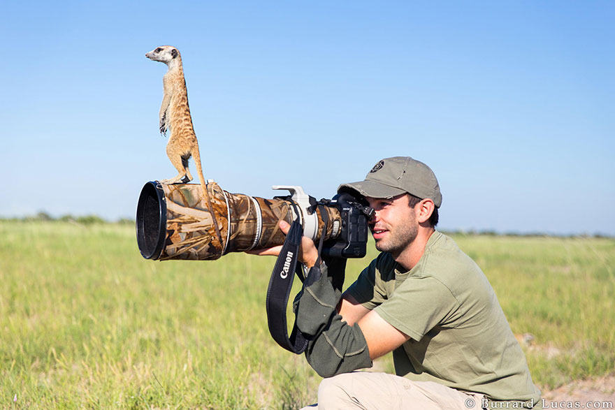 animals-with-camera-helping-photographers-13