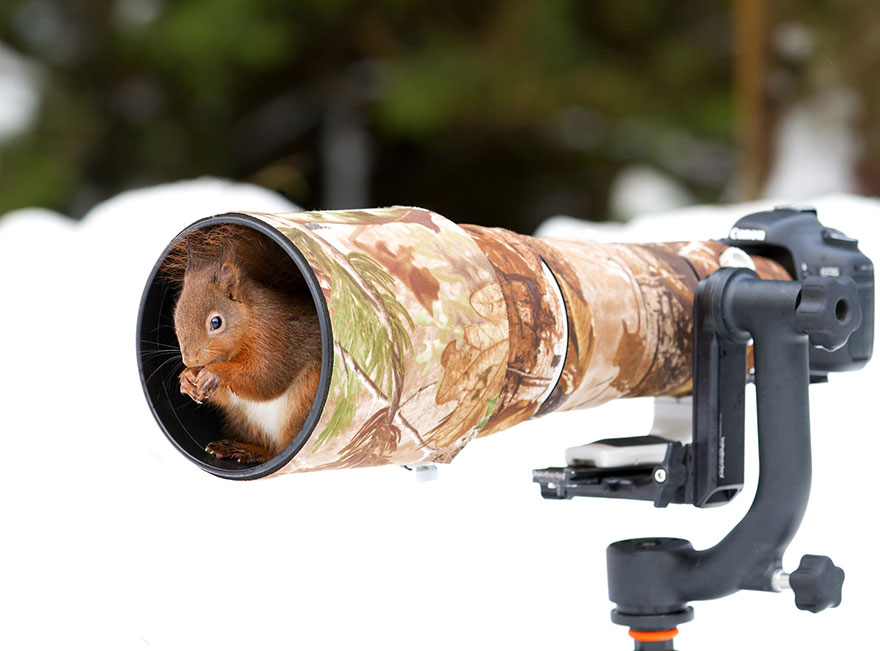 animals-with-camera-helping-photographers-14