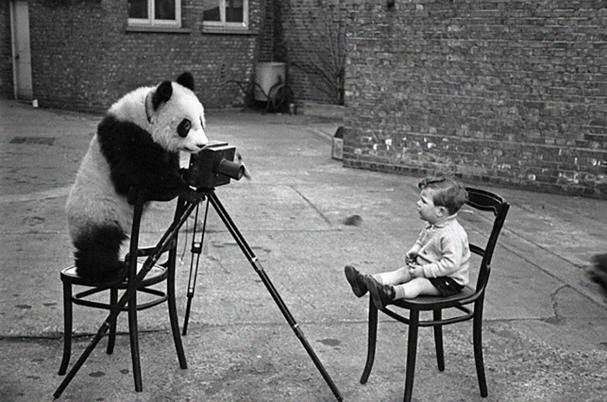 animals-with-camera-helping-photographers-15