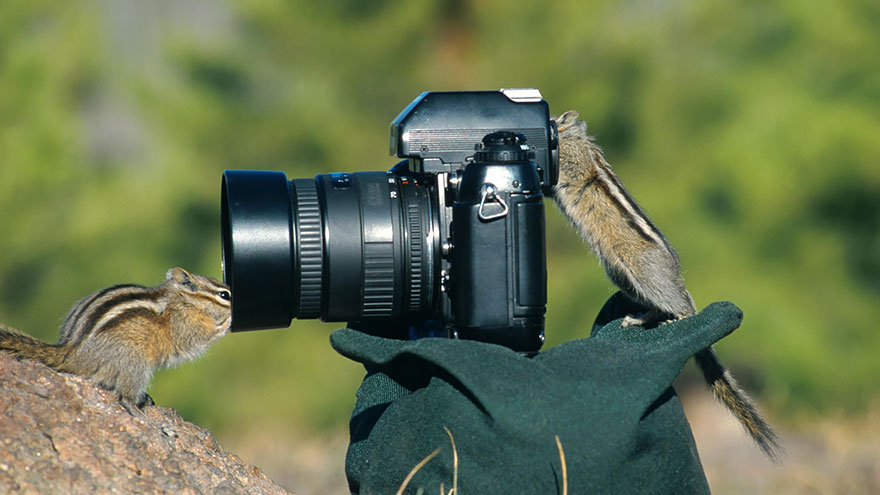 animals-with-camera-helping-photographers-16