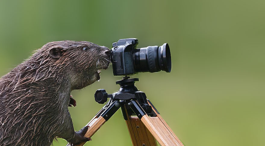 animals-with-camera-helping-photographers-17