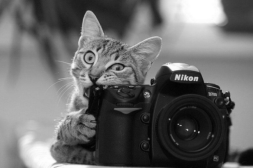 animals-with-camera-helping-photographers-18