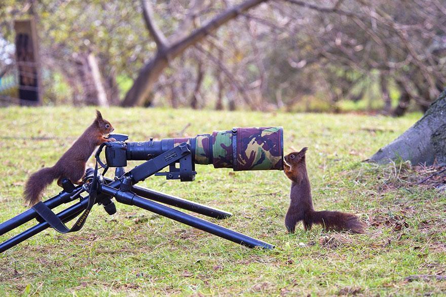 animals-with-camera-helping-photographers-19