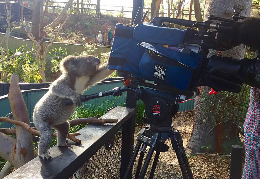 animals-with-camera-helping-photographers-2