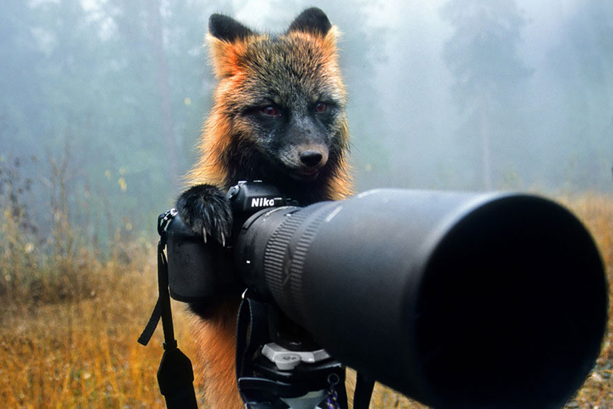 animals-with-camera-helping-photographers-20