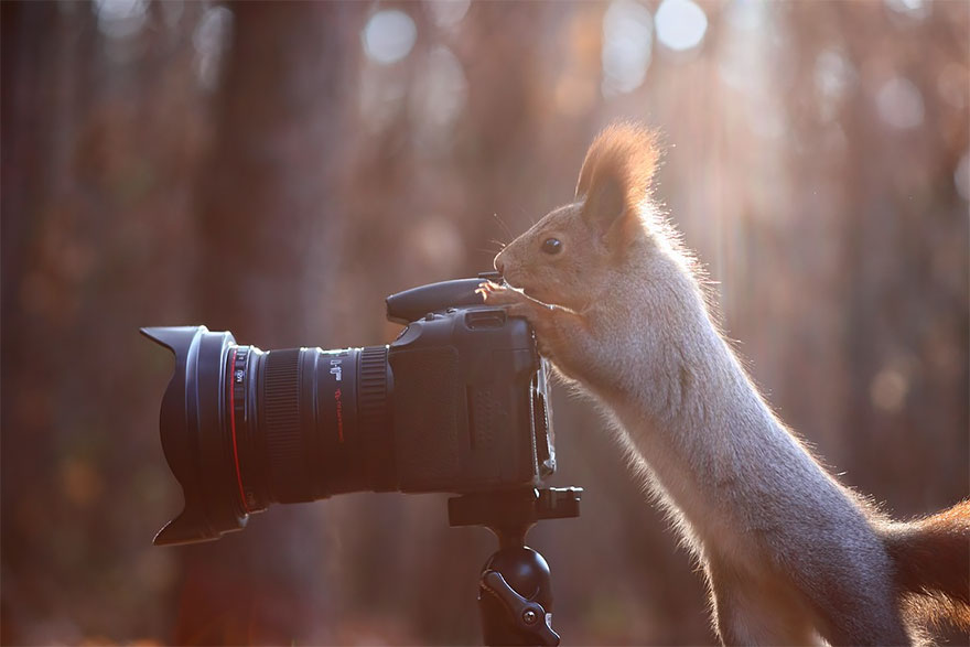 animals-with-camera-helping-photographers-21