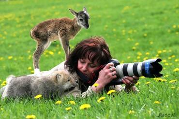 21 állat, aki szeretne a fotós helyében lenni