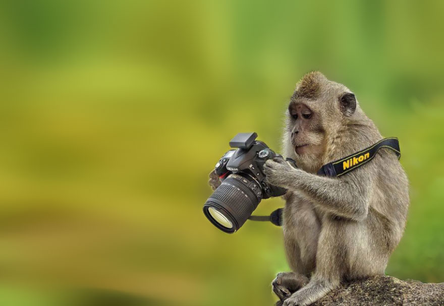 animals-with-camera-helping-photographers-7
