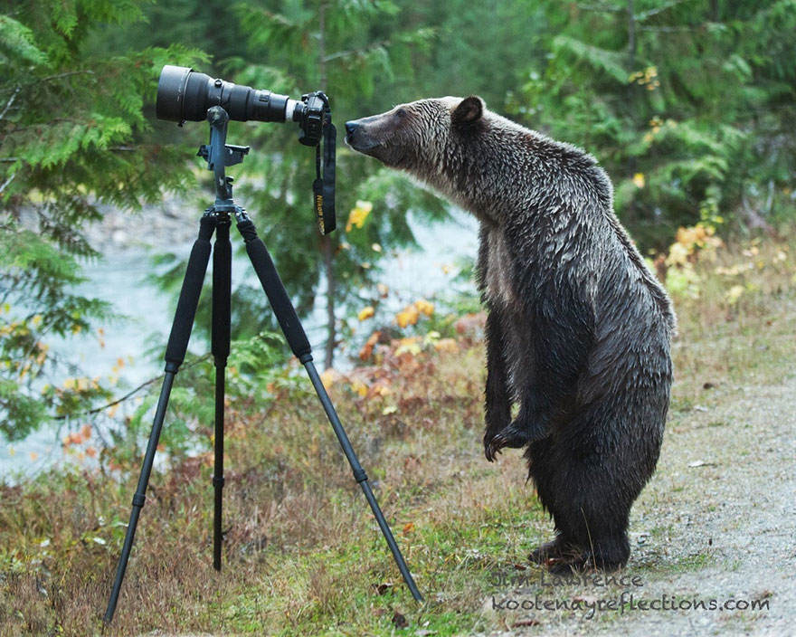 animals-with-camera-helping-photographers-8