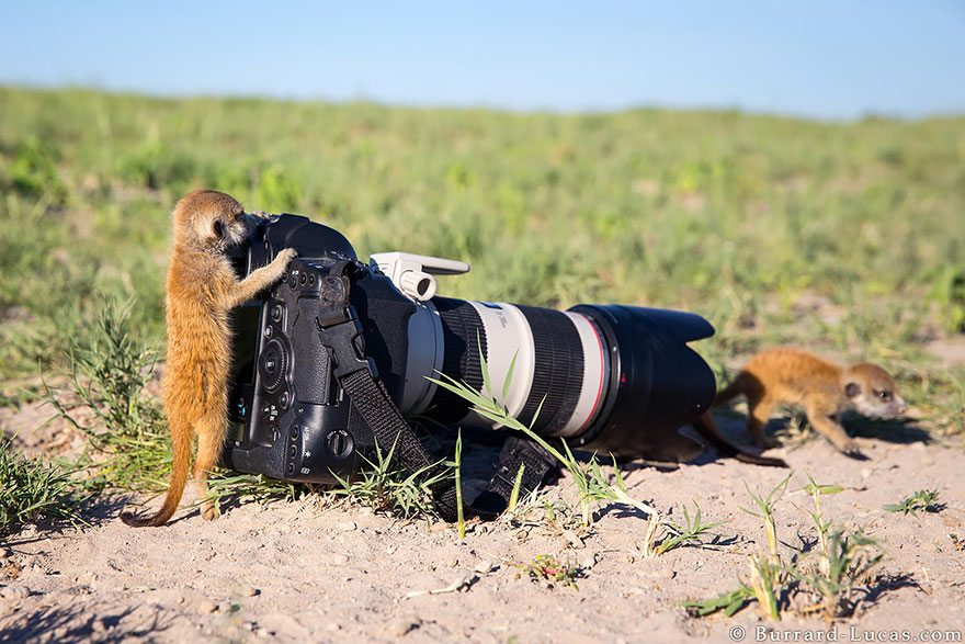animals-with-camera-helping-photographers-9