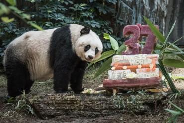 A világ legöregebb pandája 37 éves és guiness-rekorder