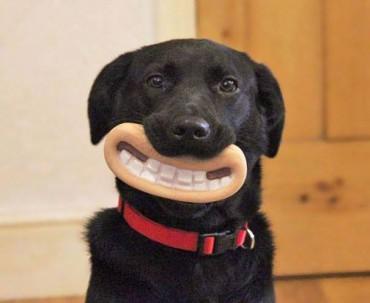 Kutyák, akiknek fogalmuk sincs milyen mókásan néznek ki játékaikkal