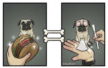 Így látják a kutyák a világot