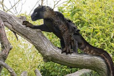 25 nagyon vicces hibrid állat, amitől rémálmaid lesznek