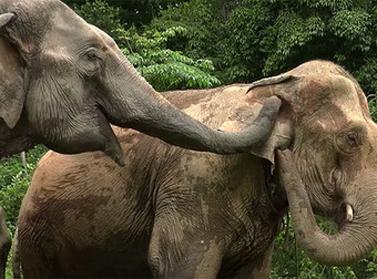 Évek múltán ez az elefánt újra maga mellett tudhatja kicsinyét, igazán megható