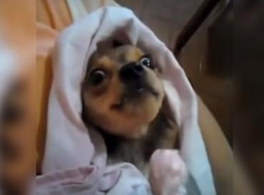 Ez a kutyus úgy eszi a joghurtot, mint egy kisbaba