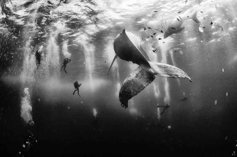 Ezek lettek a 2015-ös National Geographic Travel fotóverseny győztesei