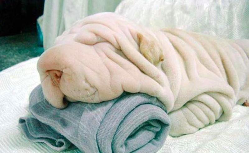 13 kutya, aki mindenre hasonlít, csak kutyára nem