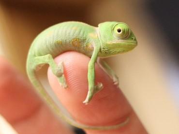 A 22 legcukibb és legapróbb háziállat, akik elférnek egy ujjadon