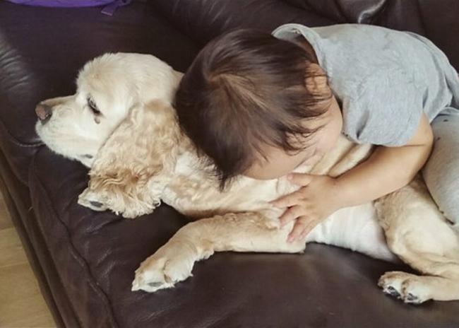 20 igazán szeretetteljes állat, akik imádják, ha ölelgetik őket