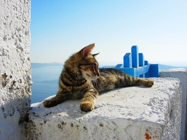 A turisták a legrosszabbak, kivéve mikor imádni való állatkák