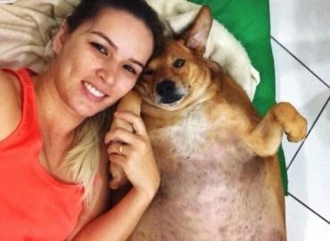 Ez a kóbor kutya rendkívül rossz egészségügyi állapotban volt, de megmentették, szívmelengető