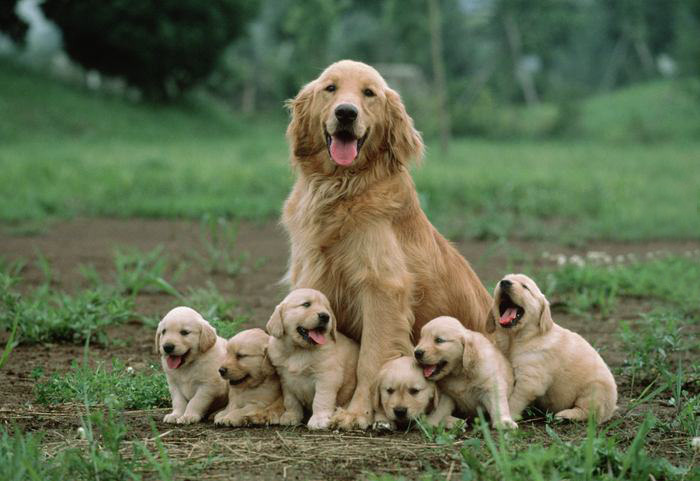 dogs-and-puppies-35__700