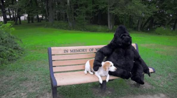 Nagyon meg fogja viselni ezt a kutyát, mikor rájön majd, hogy a kitömött gorillája nem is valódi