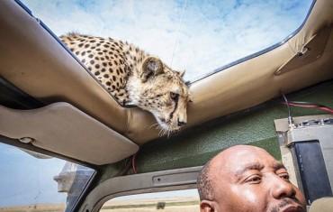 9 durva fotó a szafariról, akár csúnyán is végződhet az ilyesmi
