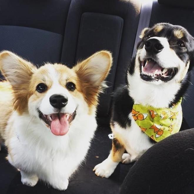 17 kutya, akinek egyetlen célja, hogy gyakrabban mosolyogjál