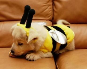 19 kutyus, akik alig várják a Halloweent