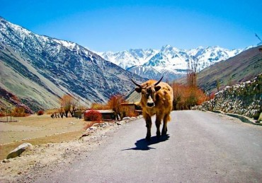211 új faj, melyet a Himaláján fedeztek fel