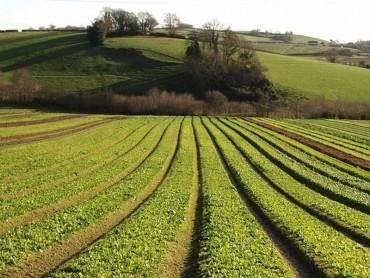 Ez a szag terjeng a növények kommunikációja során, ha veszélyben érzik magukat