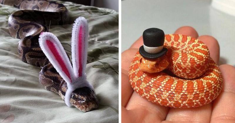 Ijesztőnek tartod a kígyókat? Tegyél rájuk kalapot!