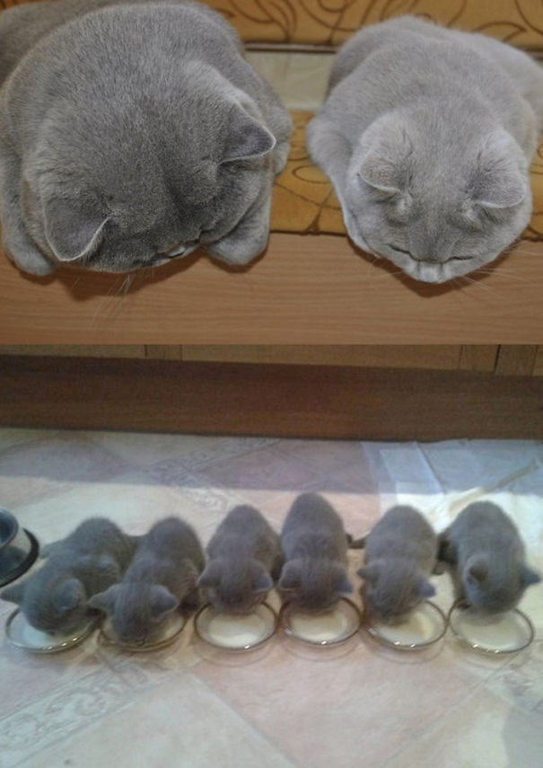 proud-cat-mommies-221__605