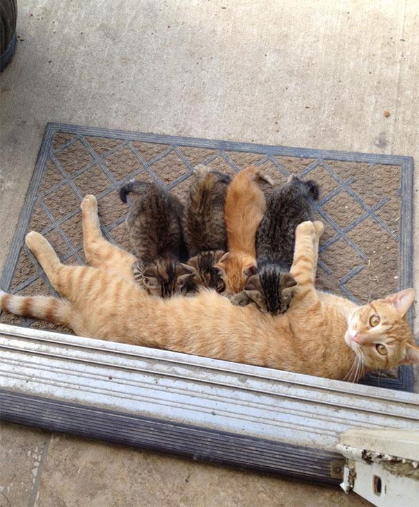 proud-cat-mommies-24__605