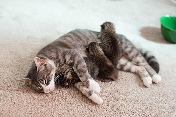 proud-cat-mommies-26__605