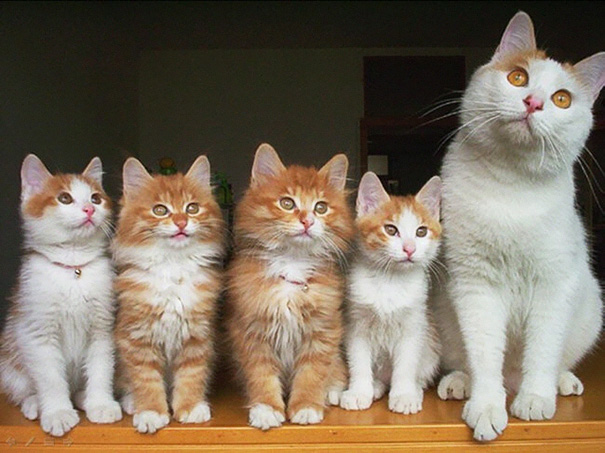 proud-cat-mommies-281__605