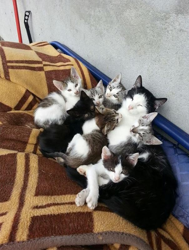 proud-cat-mommies-331__605