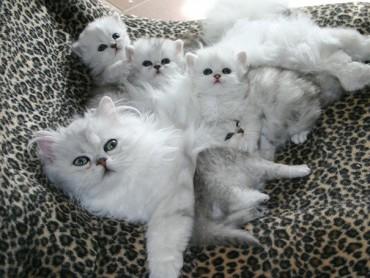 20 büszke anyamacska a kiscicáival