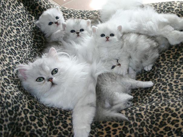 proud-cat-mommies-361__605.jpg