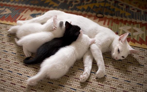 proud-cat-mommies-401__605