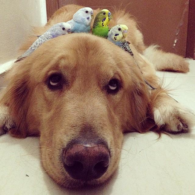 Ennek a kutyusnak különös baráti köre van. Olyan cukik együtt!